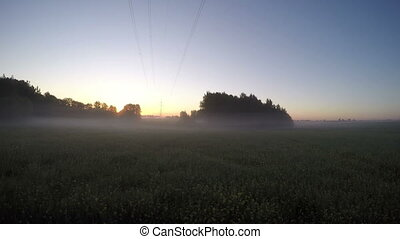 beautiful summer sunrise on field