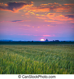 Beautiful summer sunset in the village with church and field of wheat