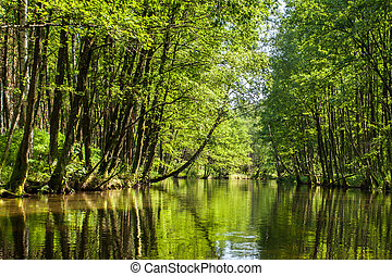 Beautiful summer view of the river in forest