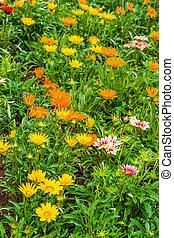 Beautiful summerflowers on a green meadow