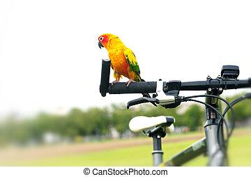 Beautiful Sun Conure Pet Parrot on