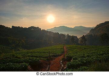 beautiful sun rise in doi ang khang chiang mai northren of...