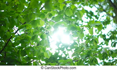 Beautiful Sun shine through tree green leaves - Nature...