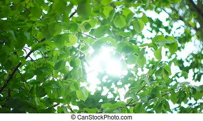 Beautiful Sun shine through tree green leaves