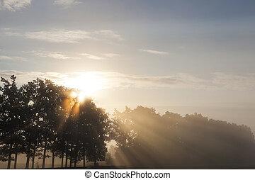 Beautiful sunbeams