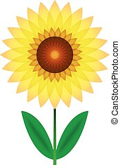 Beautiful sunflower for design