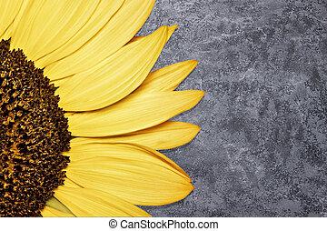 Beautiful sunflower on pink background.