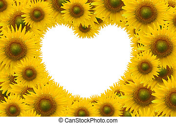 Beautiful sunflower with white space heart shape