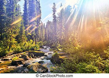Beautiful sunlight in Siberian mountain forest