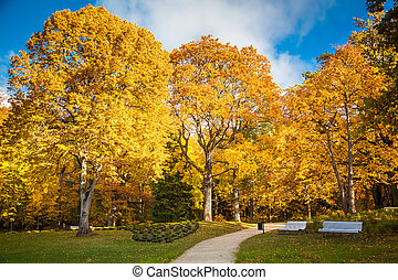 beautiful sunny autumn park