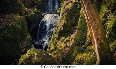 Beautiful Sunny Forest Waterfall - Pretty woodland scene of...