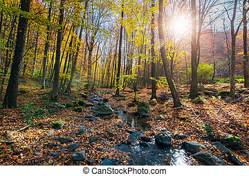 beautiful sunny scenery in autumn forest. lots of foliage on...