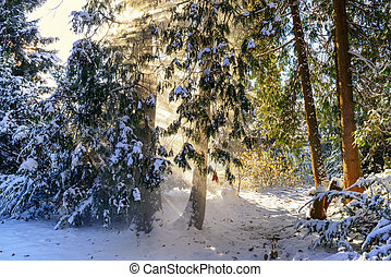 Beautiful sunrays in the winter forest