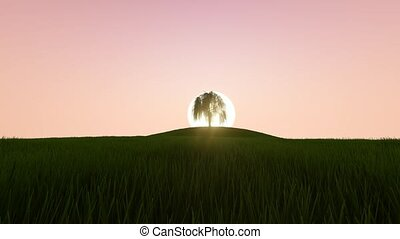 Beautiful Sunrise and Growing Tree.
