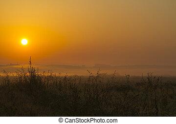 Beautiful sunrise in the field
