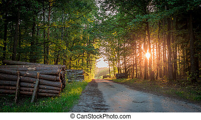 Beautiful sunrise in the forest at summer in Poland