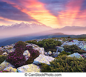 Beautiful sunrise in the mountains. Summer landscape with pink flowers