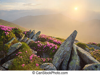 Beautiful sunrise in the mountains with flowers