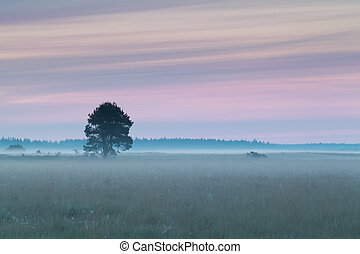 beautiful sunrise on summer meadow