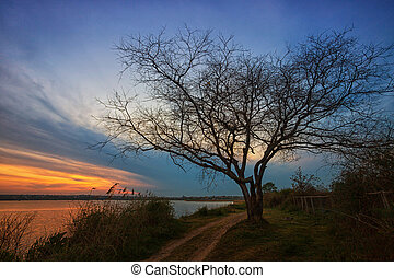 Beautiful sunrise on the lake, with a tree and a road along the shore in the foreground