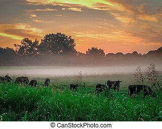beautiful sunrise over farmland in south carolina