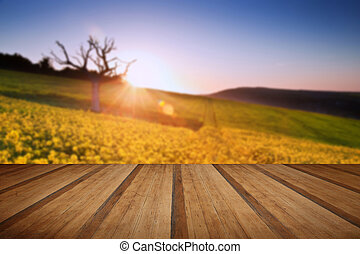 Beautiful sunrise over field of rapeseed in countryside in Sprin