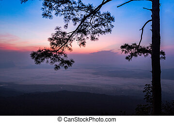 Beautiful sunrise purple and blue sky on top view hill mountain cliff and branch silhouette pine tree