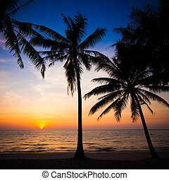 Beautiful sunset at tropical beach with palm trees