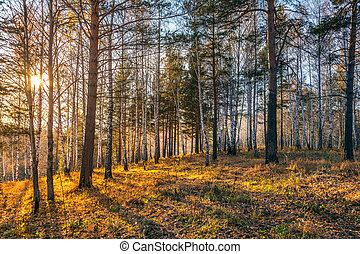 Beautiful sunset in autumn forest.