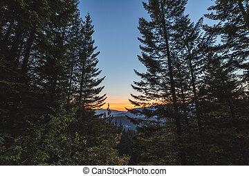 Beautiful Sunset in Remote Forest