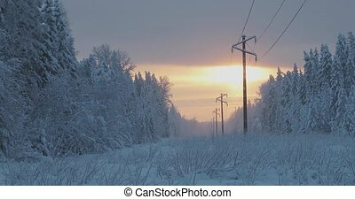 beautiful sunset in the forest near the power line