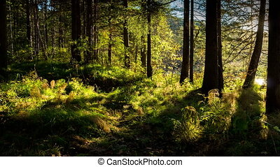 Beautiful sunset in the forest. Time lapse. Bright rays of the sun it the woods