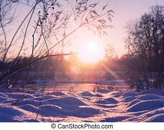 Beautiful sunset in the winter forest