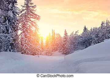 Beautiful sunset in winter forest Jluia Alps in Slovenia