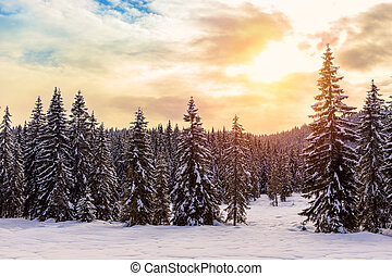 Beautiful sunset in winter forest
