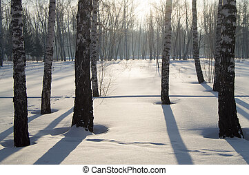 Beautiful sunset in winter Park, trees, snow