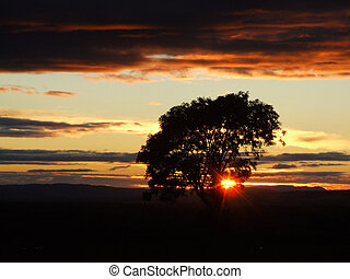Beautiful sunset landscape with a tree and sun beams