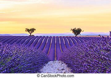 Beautiful sunset lavender field