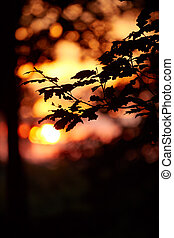 Beautiful sunset light on the oak forest