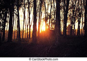 beautiful sunset light ray sunshine with tree silhouette background