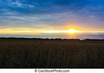 beautiful sunset on a wheat field