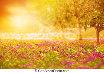 Beautiful sunset on floral field