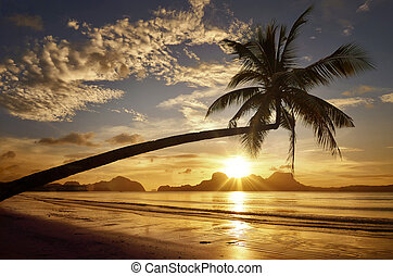 Beautiful sunset on the background of the islands with palm tree on the beach.