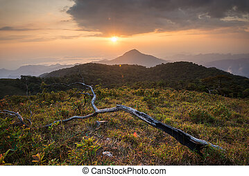 beautiful sunset on the mountain with dead tree