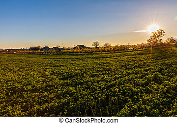 beautiful sunset over a field in rural country Romania