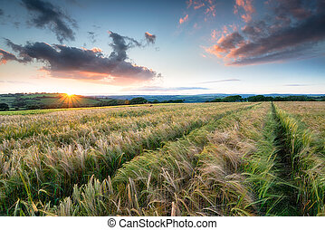 Beautiful Sunset over Farmland