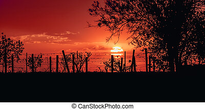 Beautiful sunset over field and single tree in summer evening