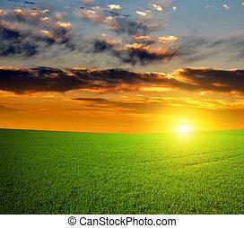 green field - Beautiful sunset over green field.