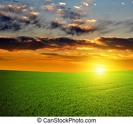 Beautiful sunset over green field.