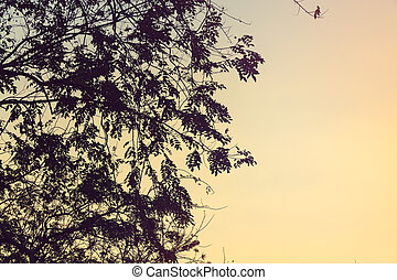 Beautiful Sunset Sky, through tree leaves